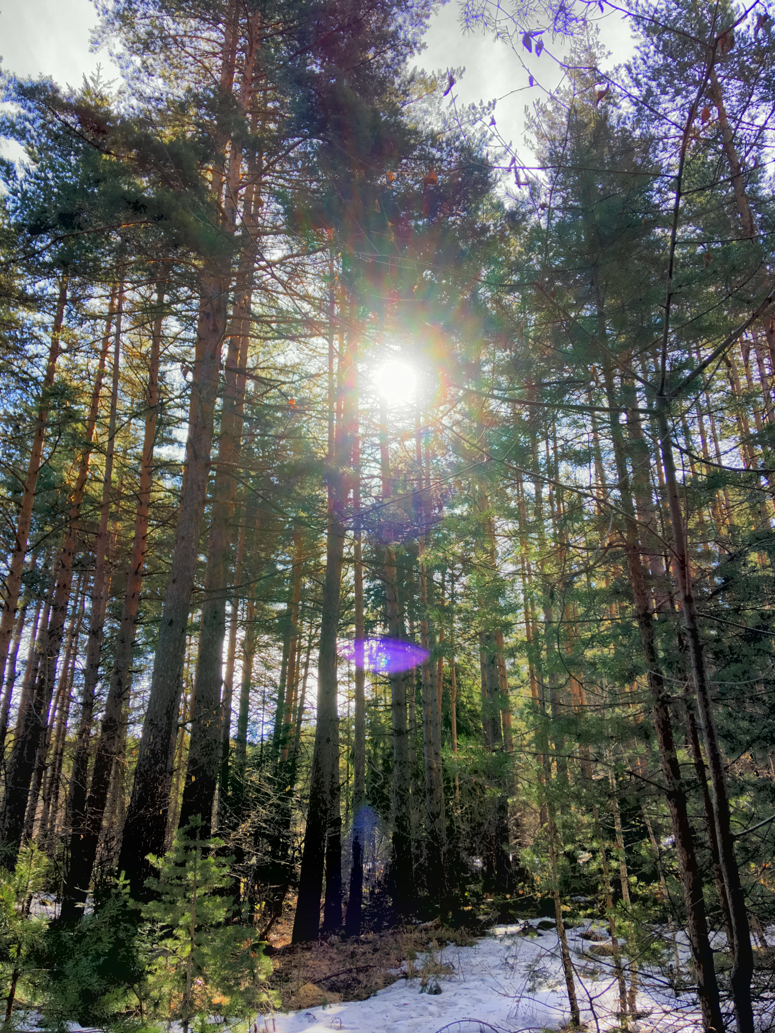 The Forest on Pirin Mountain